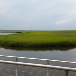 the marsh view